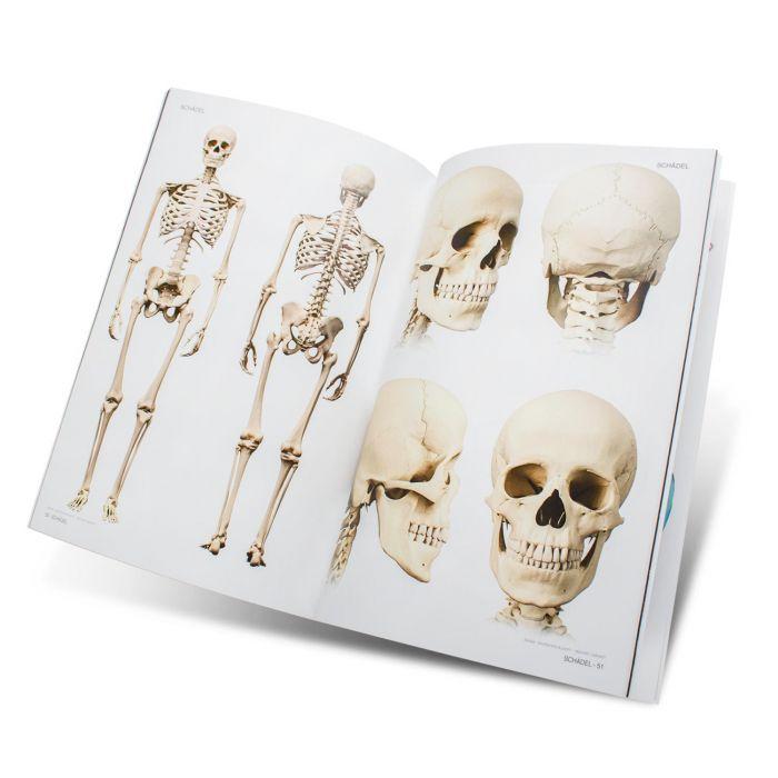 Boek: Skull & Bones Book - Templates for Artists